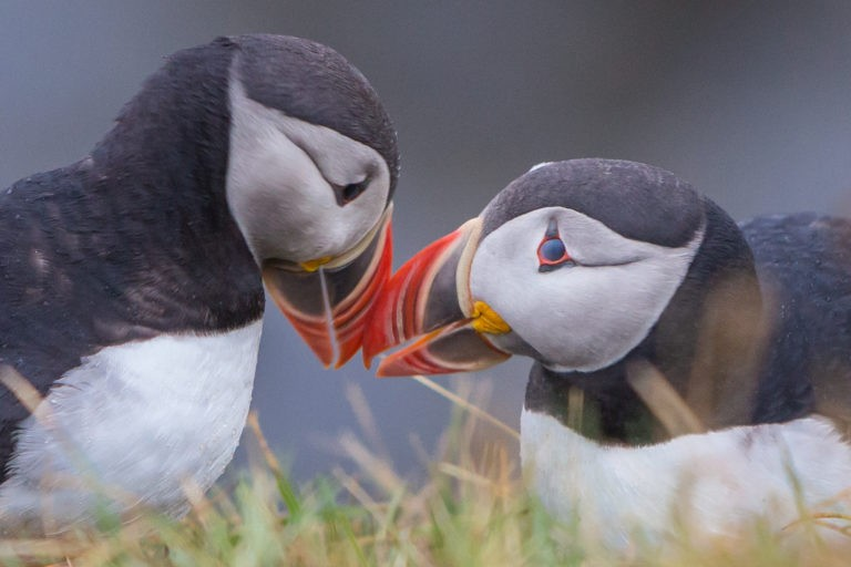 Potholes, Puffins and Patience